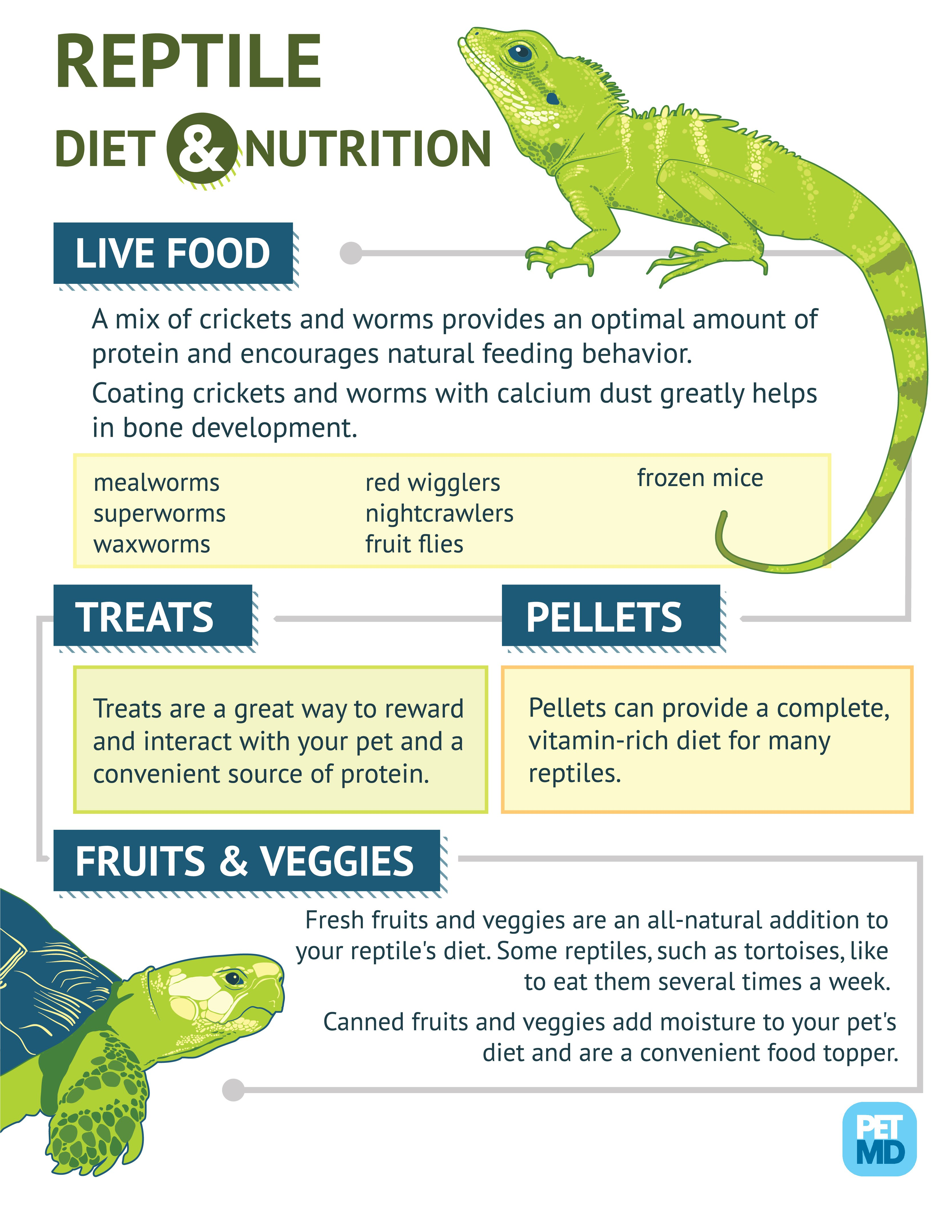 reptile_food_hires- info graphic